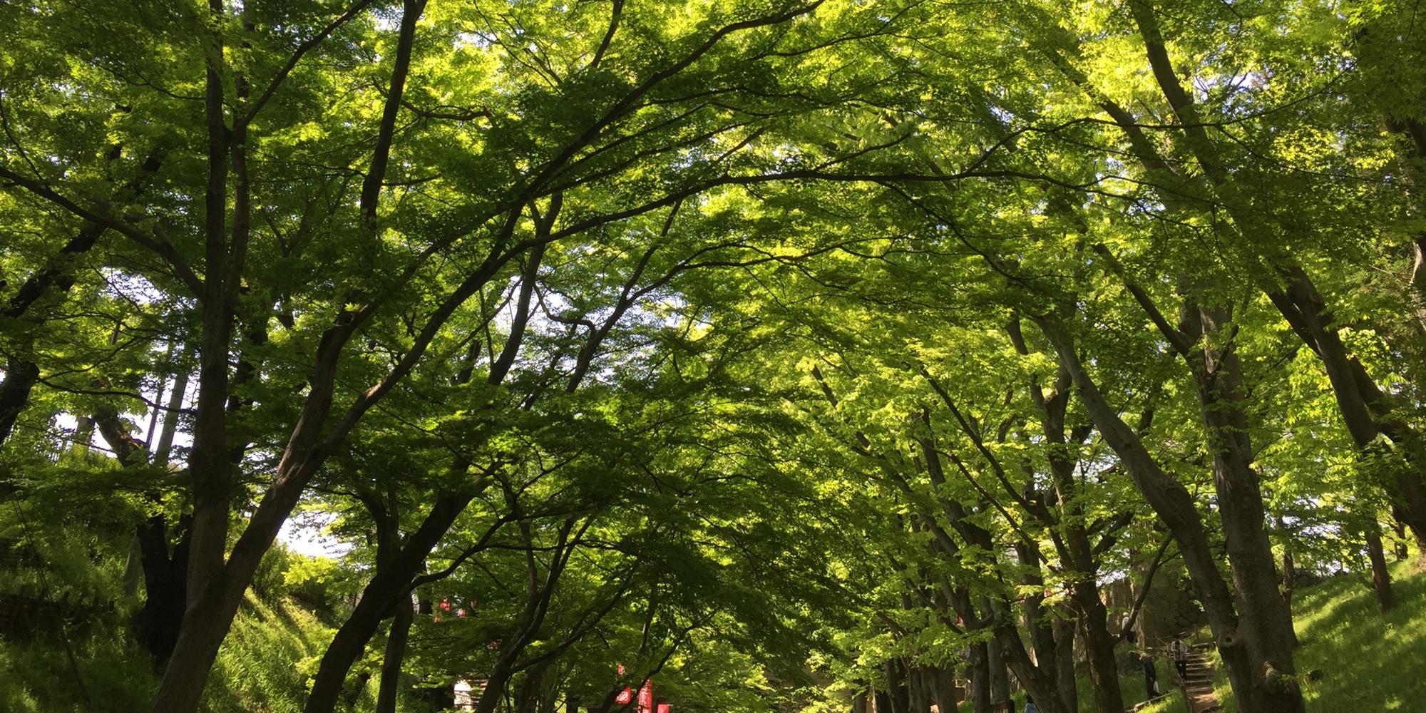 株式会社 I・T green